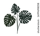 monstera leaf silhouettes ... | Shutterstock .eps vector #1699698058