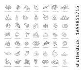 vector set of natural...   Shutterstock .eps vector #1699851715