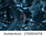Sparrow Bird Sitting On Tree...