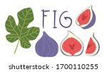 Fig Vector Cartoon Elements And ...