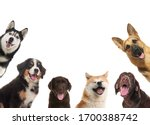 Set With Different Cute Dogs O...