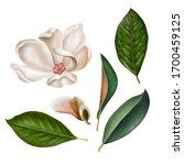 Collection Of Magnolia Leaves...