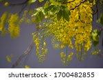 Flowers Multiply Fresh Yellow...