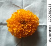Marigold Flowers In The...