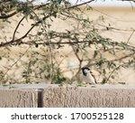 Sparrow On Branch  Tree Sparrow ...