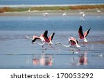 Izmir Bird Paradise  Flamingos