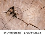 Dry And Dead Tree Stump With...