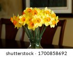 Jonquils  Narcissus  Daffodil...