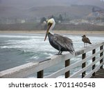 Pelican Sitting On A White...