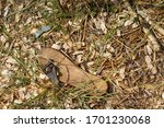 Lost And Forgotten Sandal At...