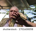 a man holds a spotted Python on his arm - stock photo