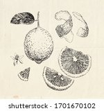 Hand Drawn Lemon Fruit  Sliced...