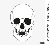 hand drawn vintage human skull... | Shutterstock .eps vector #1701720532