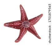 starfish vector icon.cartoon... | Shutterstock .eps vector #1701879565