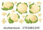 cauliflower vector cartoon set... | Shutterstock .eps vector #1701881245