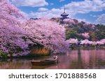 Pink Sakura Flowers Cherry...