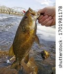 Small Mouth Bass Fish Held by Jaw Caught on the Mississippi River with Water Rock Bridge Background