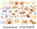Set Of  Starfish  Shells  Crabs ...
