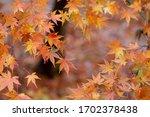 Amazing Colorful Background Of...