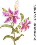 vector watercolor trace... | Shutterstock .eps vector #170257898