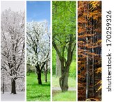 Four Seasons Collage  Winter ...