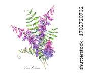 watercolor summer set of violet ... | Shutterstock . vector #1702720732