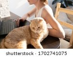 the cat is lying on the table... | Shutterstock . vector #1702741075