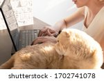 the cat is lying on the table... | Shutterstock . vector #1702741078