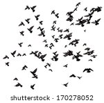 silhouettes of pigeons. many... | Shutterstock . vector #170278052