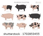pig breeds collection 2. farm...   Shutterstock .eps vector #1702853455