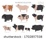 pig breeds collection 4. farm...   Shutterstock .eps vector #1702857538