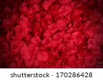 Stock photo rose petals background 170286428