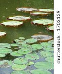 green leaves on the pond | Shutterstock . vector #1703129