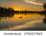 The Murray River Eucalyptus trees and Pelicans during the beautiful sunset