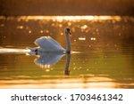Common European Wild Big Bird...