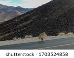 Curious Coyote on Death Valley Highway