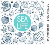 Seashells  Summer  Holidays ...