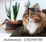 Beautiful  Domestic Cat With...