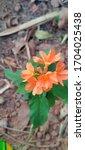 Kanakambaram Flower Having...