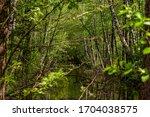 a river in a birch grove.   Shutterstock . vector #1704038575