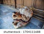 Petrified Ancient Turtle....