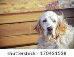 dog portrait on bench | Shutterstock . vector #170431538