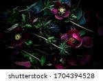 Purple Flowers Helleborus And...
