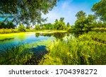 Summer Green Rural Pond...