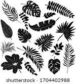 palm leaves set black and white ... | Shutterstock .eps vector #1704402988