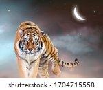 Fantasy Tiger Walking Forward...