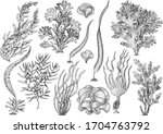 Seaweed  Kelp Collection ...