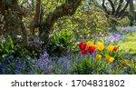 Bluebells And Tulips Reflectin...