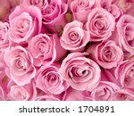 Stock photo bright pink roses 1704891