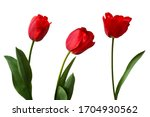 Red Tulips Isolated On White...
